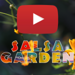 Salsa Garden Music Video